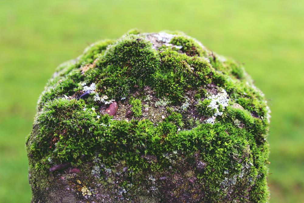 moselagt stein